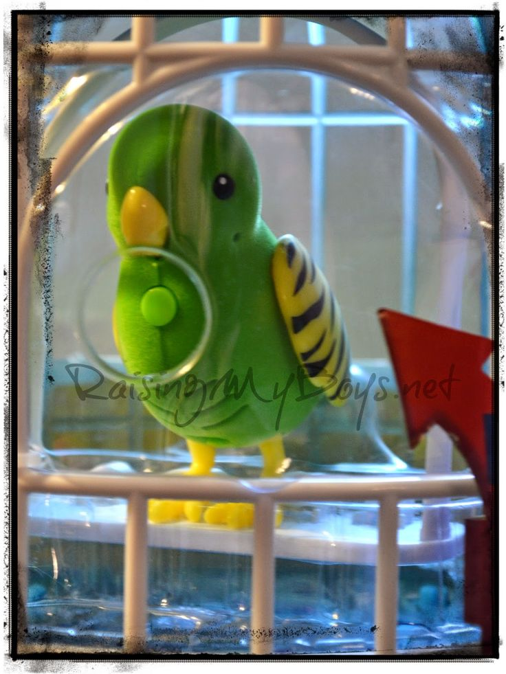 little live pets bird cage manual